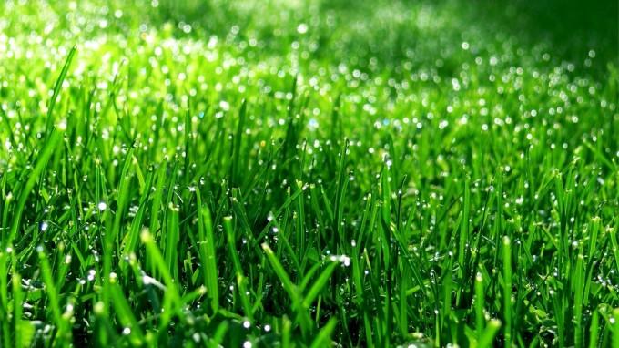 Ученые получили дешевый источник энергии из газонной травы