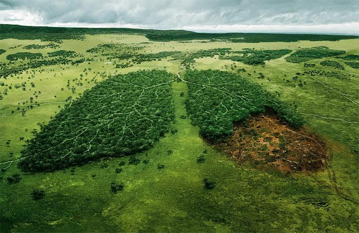 NASA считает, что биотопливо позволит очистить воздух на 70%