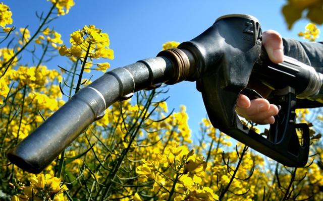 Испания: органические отходы превратят в автомобильное биотопливо