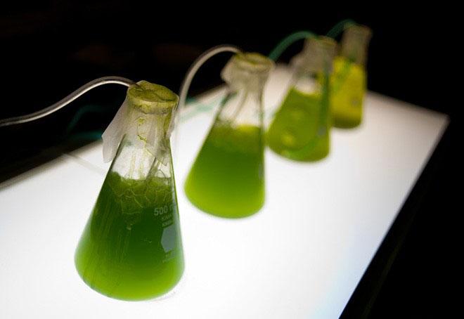 Открыт новый метод получения биотоплива
