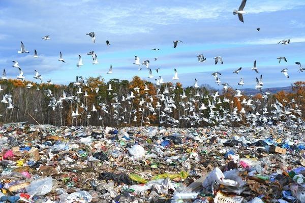 Росприроднадзор проверит все мусорные полигоны в стране