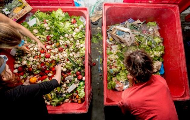 Найден быстрый способ превращения пищевых отходов в топливо