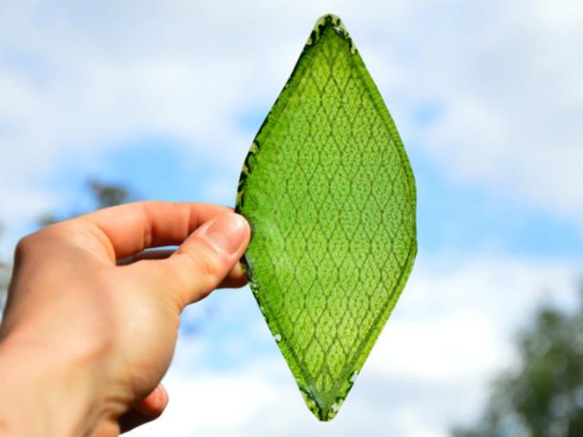 Японская компания создала «умный дом» с искусственным фотосинтезом