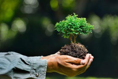 Компания Хоннольда и Sunrun запускают солнечный грантовый фонд для сообществ экологической справедливости